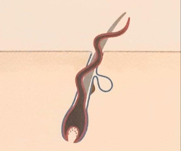 髪のうねり